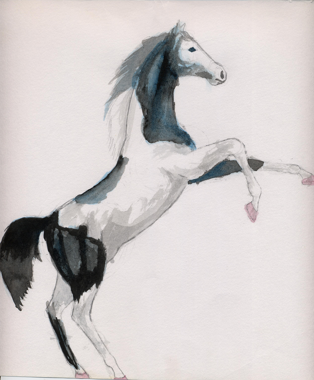 Paint Horses Rearing
