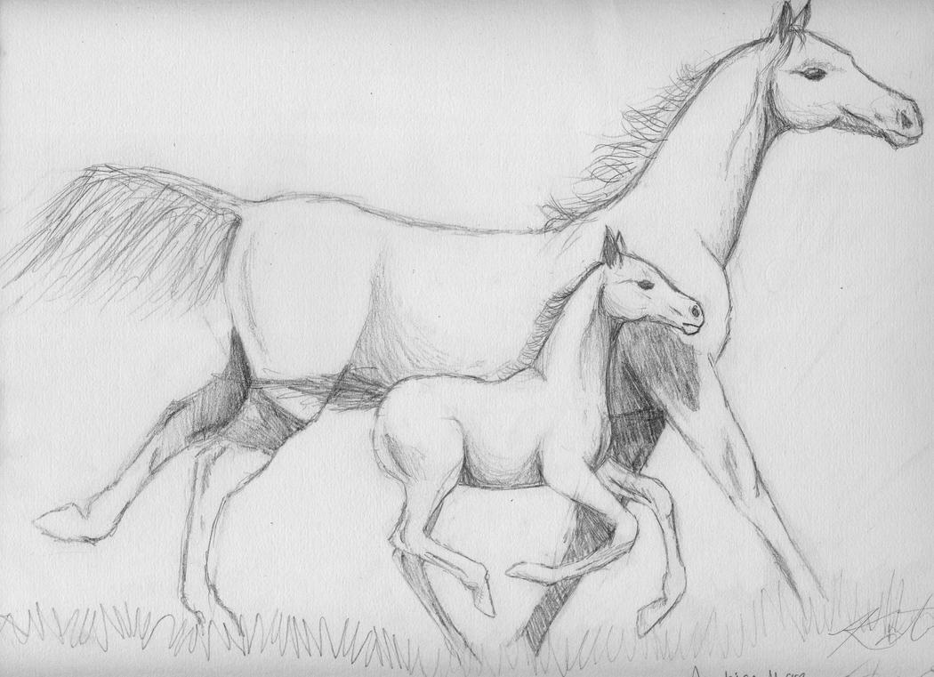 Drawing a Foal using Pastel Pencils  YouTube