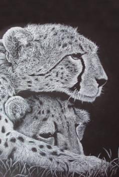 Cheetahs II