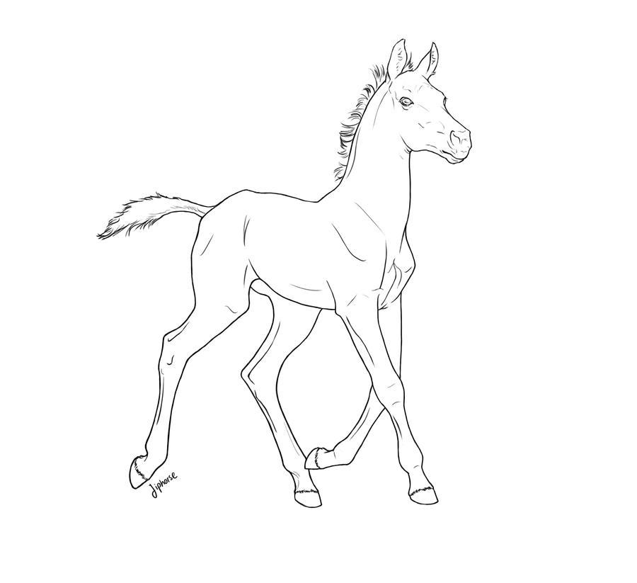 Free Line Art : Free foal lineart by jiphorse on deviantart