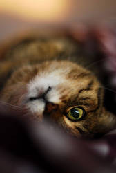 Psycho kitty by jiphorse