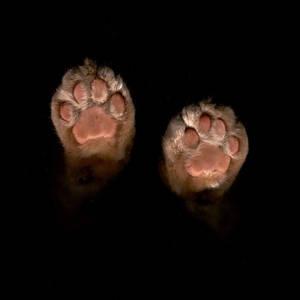 Dexter paws