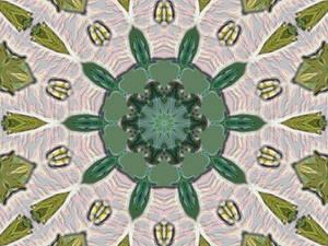 Untitled Mandala Late Summer 2012