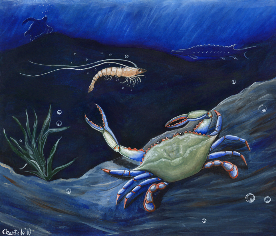 https://pre00.deviantart.net/e5bb/th/pre/i/2010/125/e/e/shrimp_and_blue_crab__oilspill_by_rjdaae.png
