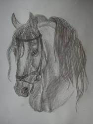 Warmblood sketch