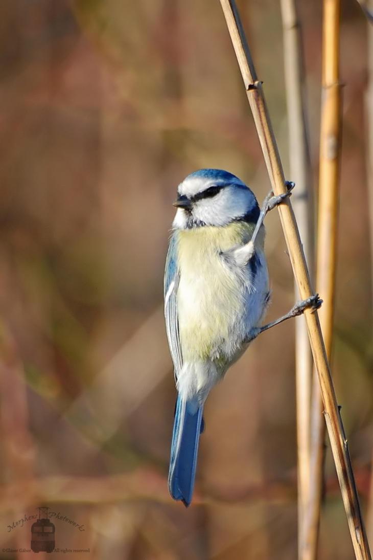 Birdie by morpheus880223