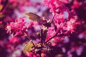Spring Spirit by Lethalxr0se