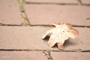Leaf by AgnethaArt