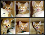 Kitten Expressions