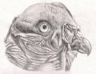 Vulture by Moondancer3