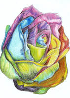 A Colorful Rose by Moondancer3
