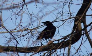 22 - Crow by BI0TERR0R