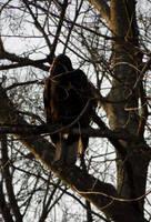 24 - turkey vulture by BI0TERR0R