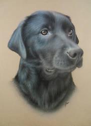 Labrador by pamslaats