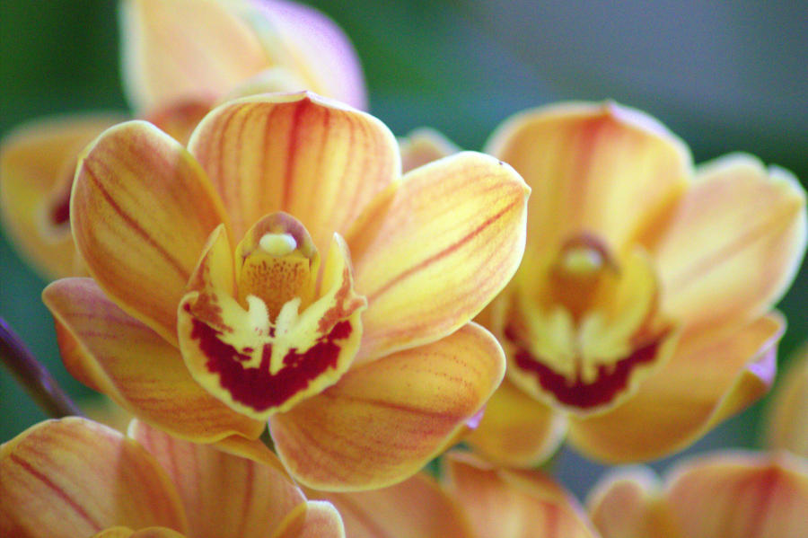 Orchids 2 by Tamamantix