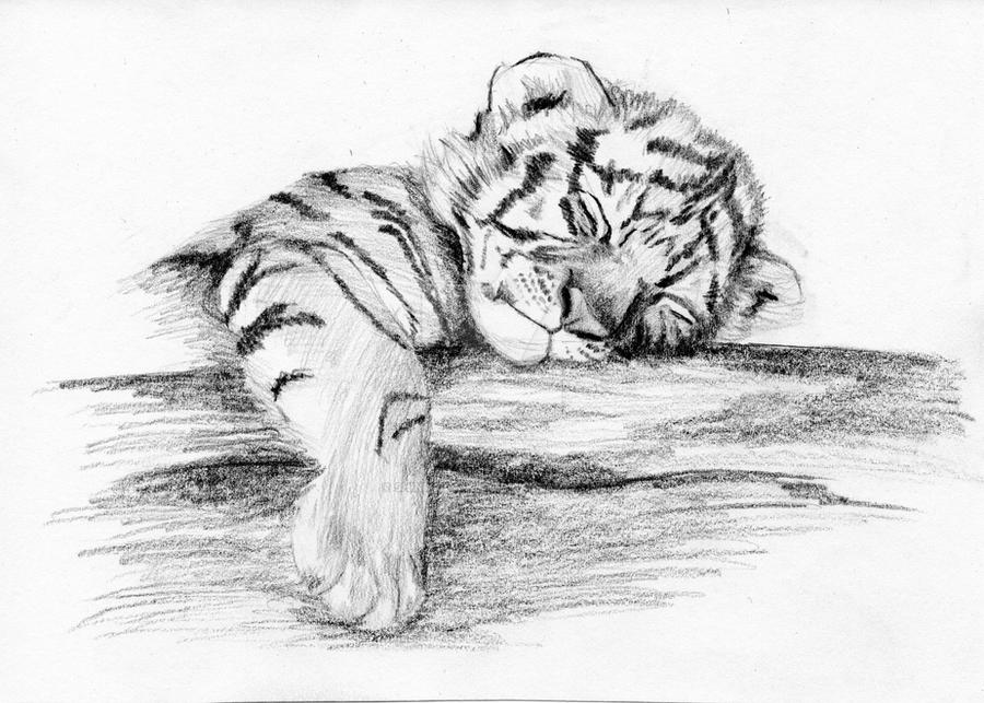 tiger cub by shinimegami86 on DeviantArt