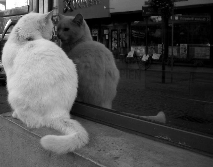 i'm talking to myself. by zupan