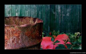 rusty. by zupan