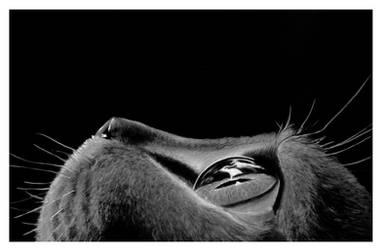 Cat #Hyperrealism