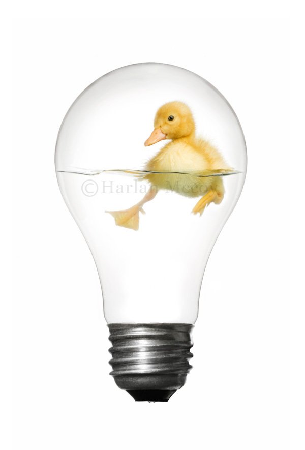 Duckbulb by harlanm