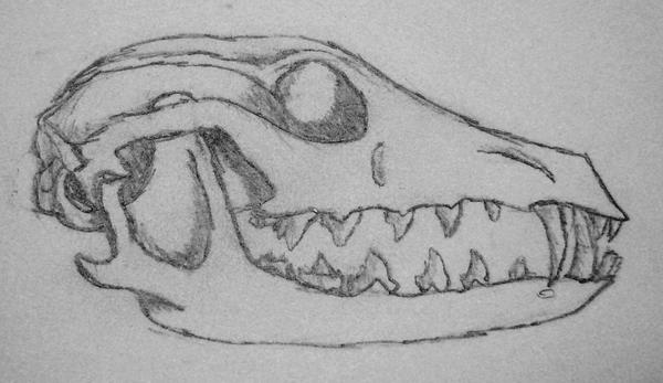 Pictures of Animal Skull Drawing - #rock-cafe