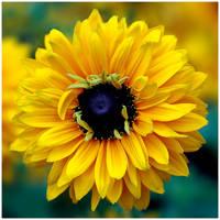 Colour Of Life XXIII by GreenEyedHarpy