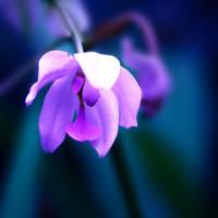 Colour Of Life XXVIII by Damienne Bingham by GreenEyedHarpy