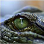 Crocodilian by GreenEyedHarpy