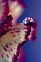 Colour Of Life XXXII by Damienne Bingham by GreenEyedHarpy