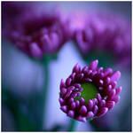 Colour Of Life XXXIV by Damienne Bingham by GreenEyedHarpy