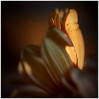 Infinity And Eternity by GreenEyedHarpy
