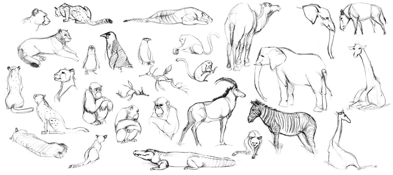 Animal Life Drawings by silentillusion on DeviantArt