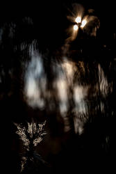 Ghost by Aeruginosus