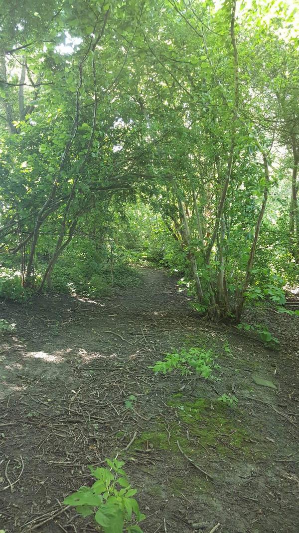 forest by jestfulHypnotist