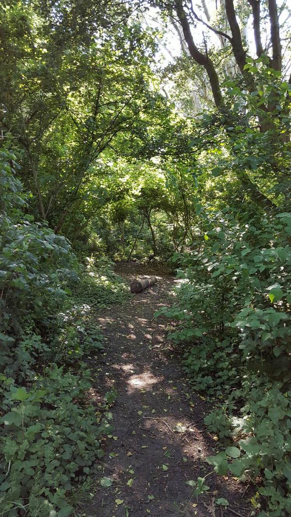 forest2 by jestfulHypnotist