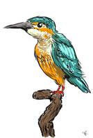 Kingfisher by NateNighthiker