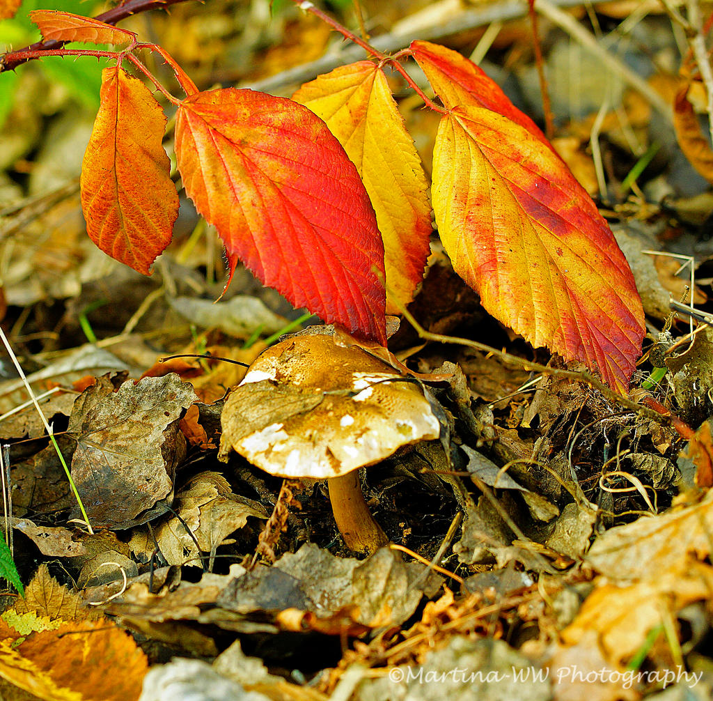Herbstfarben 2 by Martina-WW
