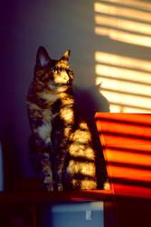 My Shadowy Cat. by xRAMENPandAx
