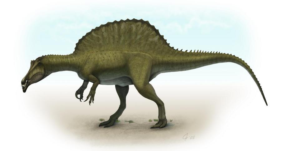 http://fc04.deviantart.net/fs70/i/2010/015/c/3/Spinosaurus_by_Olorotitan.jpg