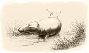 Anthracotherium
