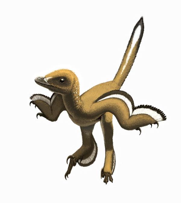 Sinornithosaurus by Olorotitan