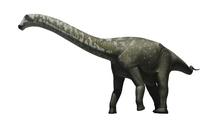 Tapuiasaurus by Olorotitan