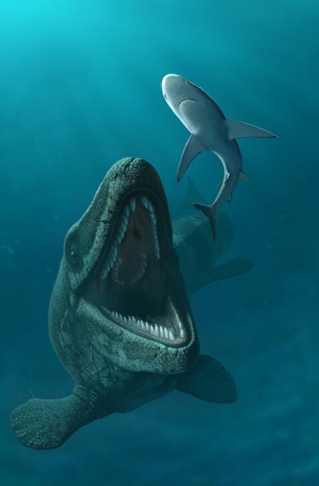 Mosasaurus hoffmani by Olorotitan