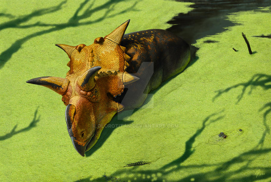 Xenoceratops by Olorotitan