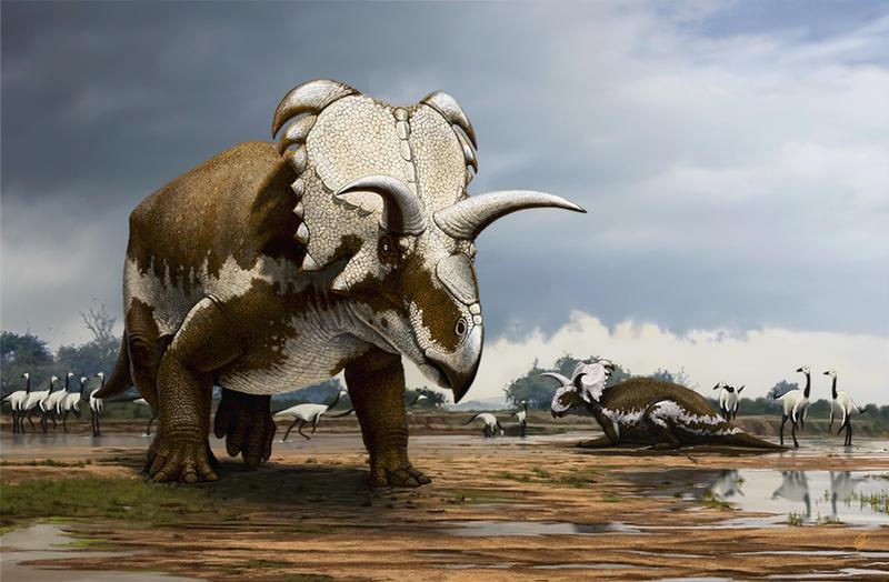 Medusaceratops lokii by Olorotitan