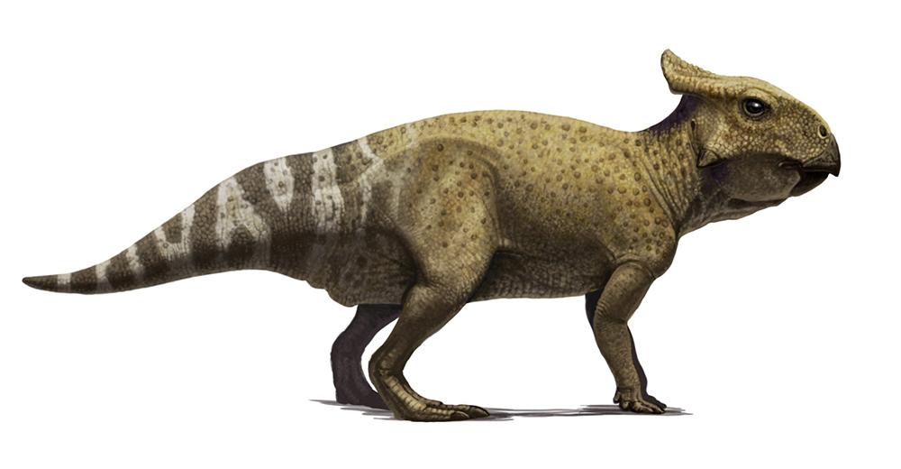 Protoceratops juvenile concept by Olorotitan