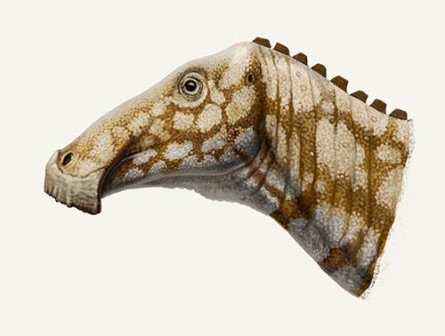Kerberosaurus by Olorotitan