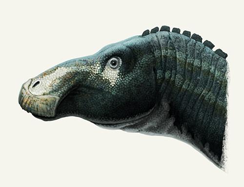 Kundurosaurus by Olorotitan
