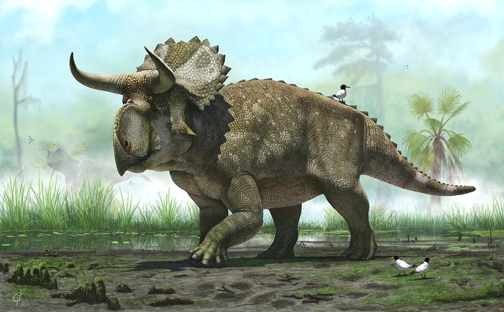 Nasutoceratops Update by Olorotitan