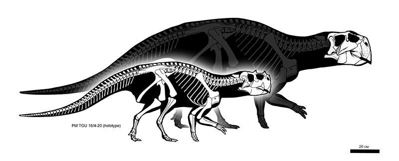 Psittacosaurus sibiricus by Olorotitan